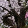 2015.04.04 関市にて
