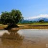 水田の季節