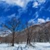 BLUE SKY,WHITE SNOW