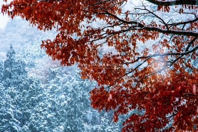 初雪~紅葉に染まる :飛騨高山