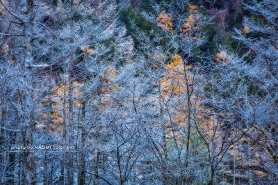 霧氷の朝:上高地 大正池