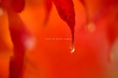 雨の紅い秋