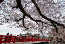 2015.04.19 飛騨の櫻