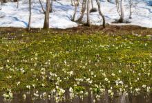 2015.04.29 雪解け水~飛騨市池ヶ原湿原