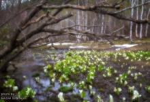 2015.05.04 うつろう季節~池ヶ原湿原