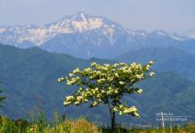 2015.05.17 5月の光~奥飛騨・新穂高