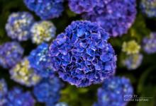 2015.06.19 雨の色 ~富山市
