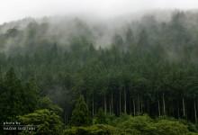 2015.09.06煙る森~飛騨市