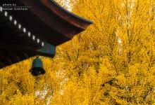 2015.11.15 YELLOWMAGIC ~国分寺・東山遊歩道