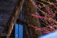 2016.01.04 1月の春~白川村