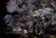 2016.04.11萩原 夜桜
