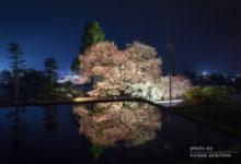 2016.04.12萩原夜桜
