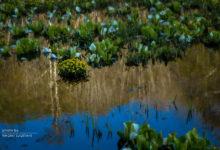2016.05.05飛騨市池之原湿原