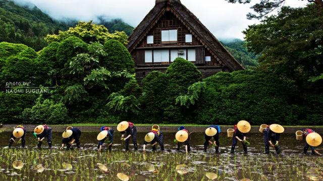 2016.0530白川郷田植え祭り