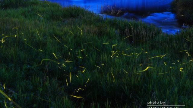 2016.06-07蛍の光、窓の・・