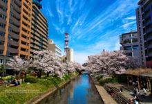 20170419富山城桜