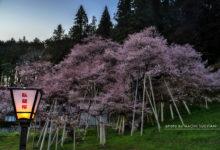 20170423桜