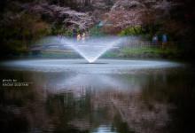 2015.04.05 雨にぬれても ~富山市・高岡市